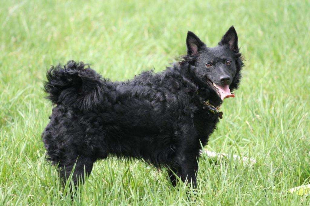 Moody Dog Breeds
